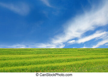 Go Green concept background - Field of green grass and...