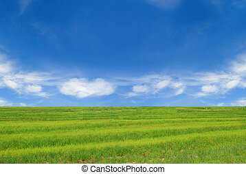 Green grass and perfect blue sky