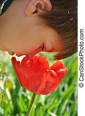 Boy smelling a big red tulip