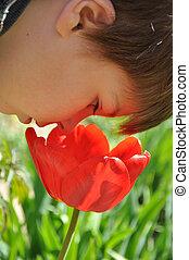 Boy smelling a big red tulip