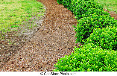A row of well maintained and manicured bushes in brown mulch...