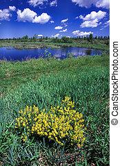 esturión, río, fauna, área