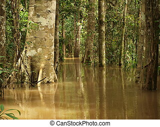 Flooded rain forest in Amazon basin - waterway in flooded...