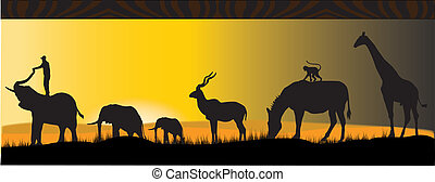 african animals walkig in the sunset