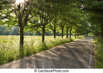 Country road on early morning in spring