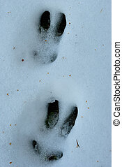 footprints hare - footprints in the snow hare