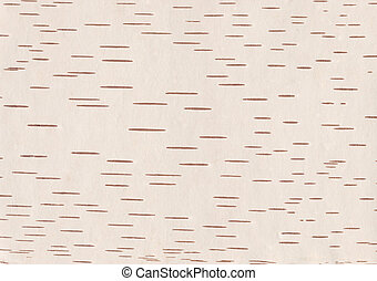 Birch bark - Natural background: birch bark, prepared for...