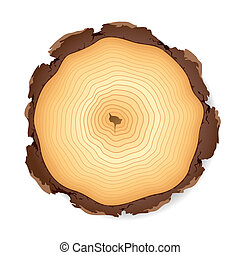 Wooden cross section - Vector illustration of a wooden cross...