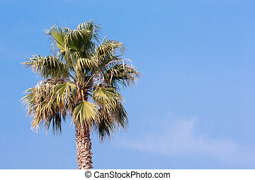 tropical holiday - green palm tree in sunny blue sky
