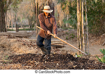 farmer making compost - asian farmer raking soil and dry...