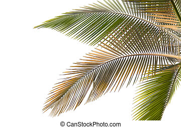 Withered and yellow palm Leaves - Part of palm tree with...