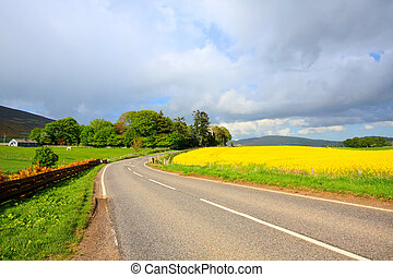 Road in the conutry with Rape fields in Springtime, Scotland
