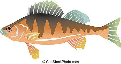 vector illustration of perch