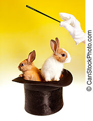 Double magic trick with rabbits - Magician with magic wand...