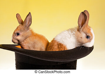 Twin rabbits in a top hat - Twin baby rabbits in a magical...