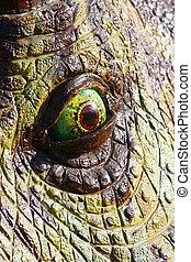 Dinosaurio, ojo