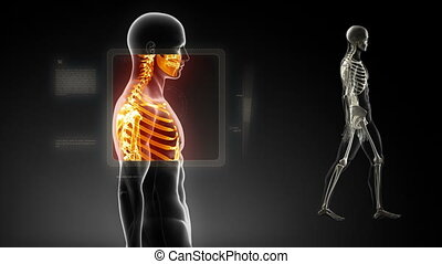 Good posture concept %u2013 x-ray spine scan