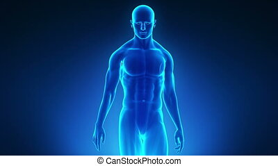 Walking man with medical data - Walking man with medical...