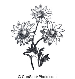 Chamomile flowers sketch. This is picture drawed with...