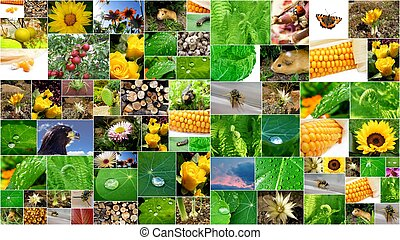 summer collage - beautifull summer collage with a lot of...