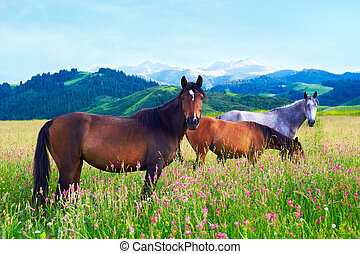 Three horses on a meadow - Three horses grazed on a meadow...