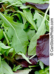 rucola - leafs of rocketsalad closeup