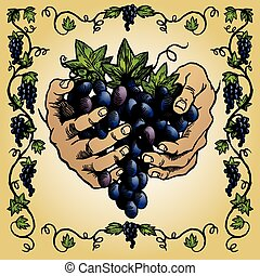 Grapevine Border - A decorative border of grapes on the vine...