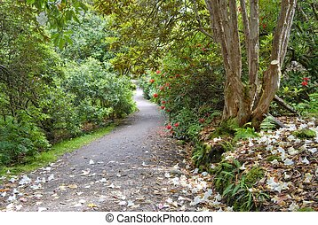 Path through Inverewe Garden, Sutherland, NW Scotland