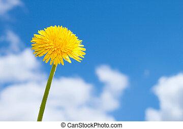 azul, primavera, flor, céu