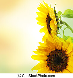 Sunflower - Summer image.