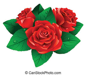 Roses. - Red roses with green leafs on white background.