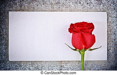 Red Rose and Letter - red rose on frozen canvas and blank...