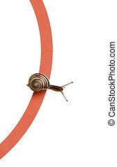 Snail Race - isolated Snail Race