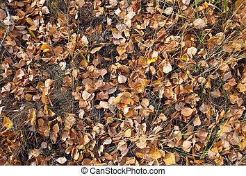 Fallen autumn leaves - fallen autumn leaves in the forest,...