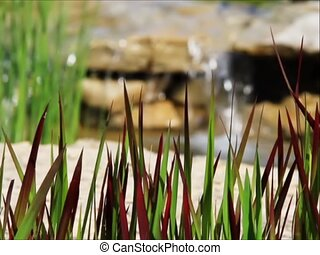 Bloodgrass and Waterfall Loop - sd - Red and green Japanese...