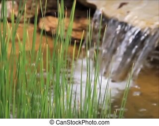 Reeds and Waterfall Pond - sd - A garden pond with waterfall...