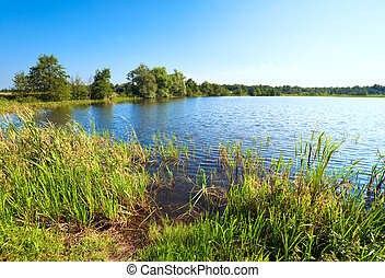 Summer rushy lake view with small grove on opposite shore
