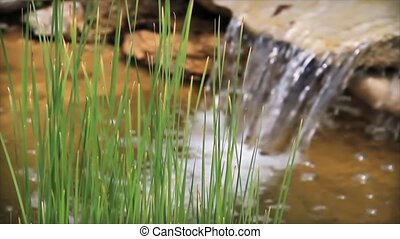 Reeds and Waterfall Pond - wide