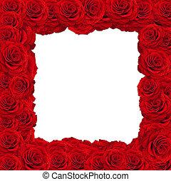 roses frame - red roses frame over white background,...