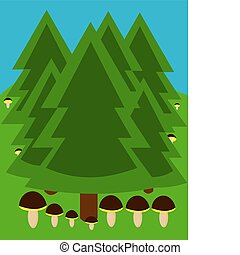 Forest with fungi - Temperate coniferous forest with growing...