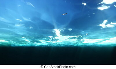 Underwater and Seagulls