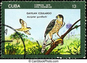 CUBA - CIRCA 1976 Accipiter - CUBA - CIRCA 1976: A Stamp...
