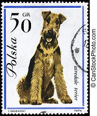 POLAND - CIRCA 1963 Airedale Terrier - POLAND - CIRCA 1963:...