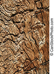 distressed wood grain in old weathered pine tree trunk