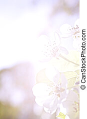 Flowers of apple in pastel colors - Flowers of apple...