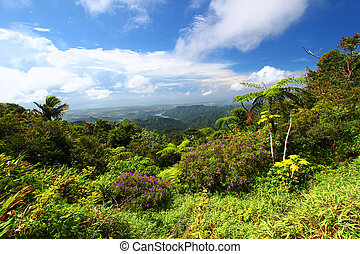 Puerto Rico Forest - Beautiful view of the lush tropical...