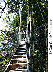 Woman at top of the Jungle at the canopy walk