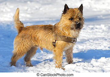 Dog in snow - A dog is standing in the snow looking. The...