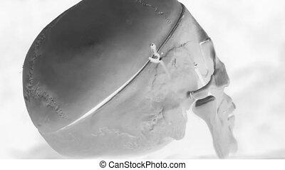 Rotating skull. Black and white. - Rotating medical skull....