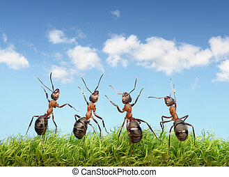perfect work team concept, ants under blue sky - perfect...